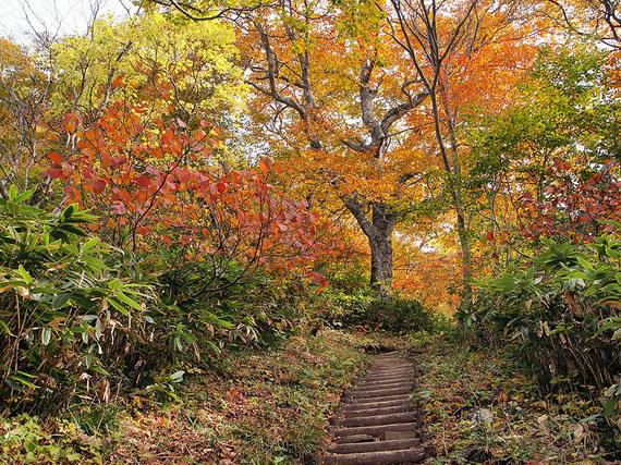 鮮やかに紅葉する平元新道1