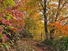鮮やかに紅葉する平元新道2