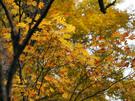鮮やかに紅葉する平元新道3