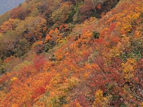 松手山の紅葉