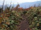 松手山コースで下山