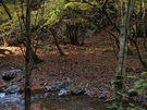 大丹波川に沿って川苔山を目指す