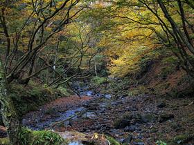 黄葉する渓谷