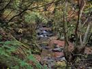 ジャングルのような大丹波川