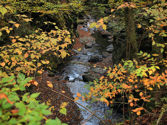 黄葉と大丹波川の渓谷美