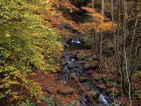 黄葉する渓谷2