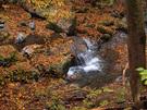 大丹波川の落ち葉たまり