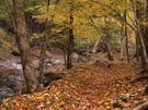 紅葉につつまれる快適な沢沿いの山道