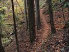 獅子口から川苔山に向かう山道
