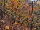 急斜面の谷間は紅葉の盛り