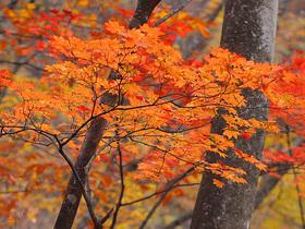 横ヶ谷平の紅葉