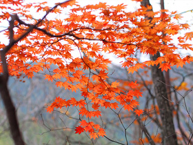 横ヶ谷平の紅葉2
