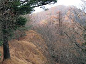 横ヶ谷平から曲ヶ谷北峰方面の山道