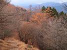曲ヶ谷北峰に向かう下り