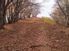 曲ヶ谷北峰から川苔山山頂を望む