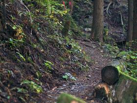 林道コースの山道