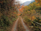 林道大丹波線と紅葉
