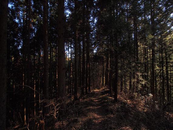 薄暗い樹林帯