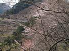 春昼の浅間林道