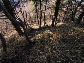 笠取小屋 東側の山道