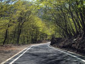新緑の一之瀬林道