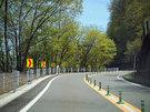 新緑の奥多摩周遊道路