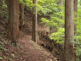 遊歩道のような登山道2