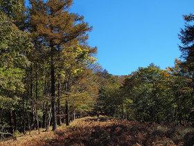 鷹ノ巣山避難小屋前の石尾根