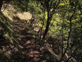 鷹ノ巣山のまき道