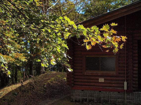 鷹ノ巣山避難小屋と紅葉