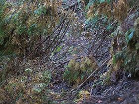 通路に横たわる倒木