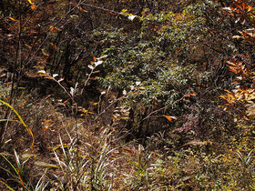 ソーヤノ丸デッコ直下の山道を見下ろす