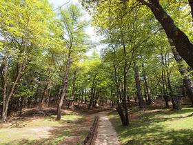 笠取小屋付近の木道