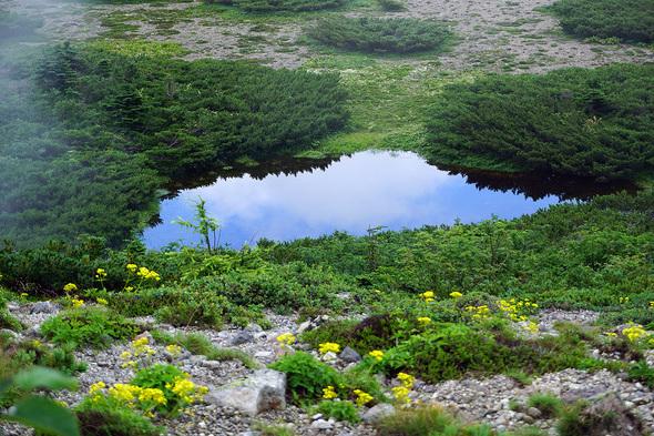 鏡のような静かな池