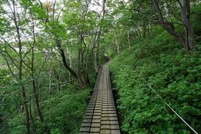 ロープウェイ山頂駅に向かう木道