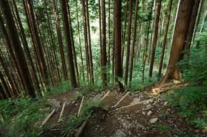 長尾平の分岐に向かう登山道(登り)