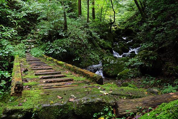 苔むした木橋