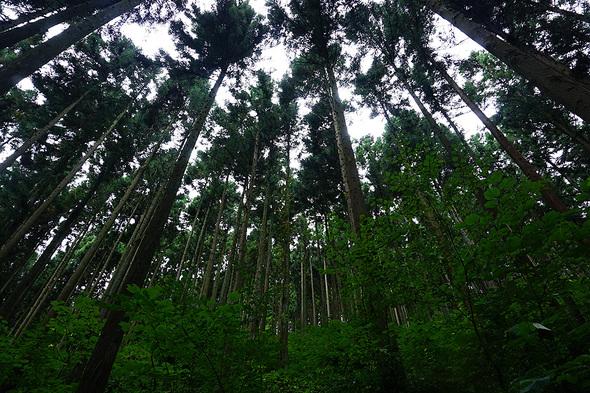見上げると林と曇り空