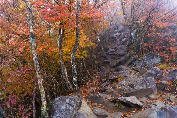 岩が多い登山道