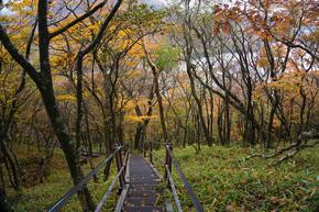 黄葉につつまれる鉄階段