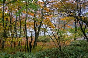大沼湖畔の緑と黄葉のコラボ