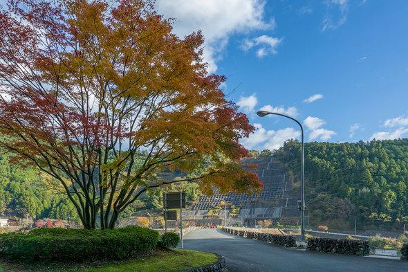 有間ダムのシンボルツリー