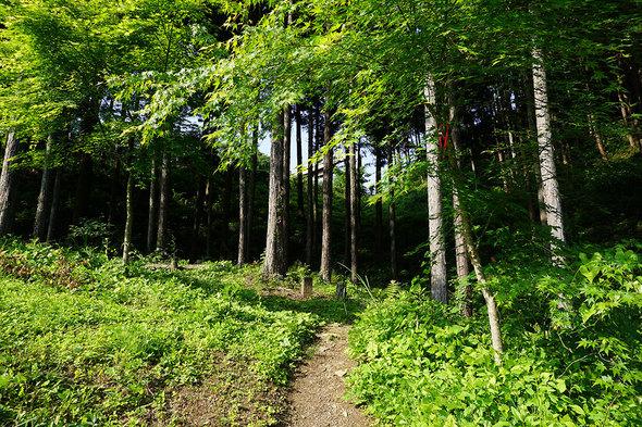 東尾根の登山口