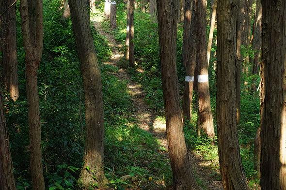 歩きやすい山道