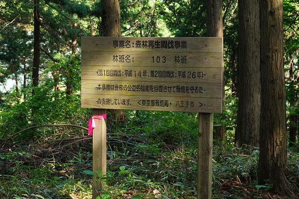 八王子市の森林再生間伐事業地