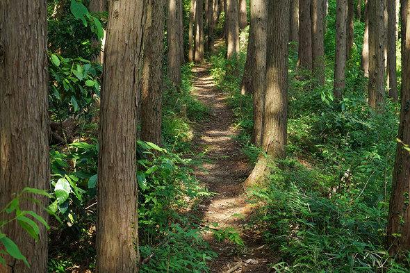 木漏れ日を浴びる快適な山道!