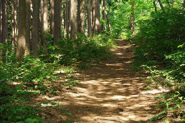 一般登山道は、幅も拡大して開放的