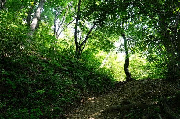 新緑に包まれた山道