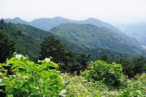景信山から城山へ向かう途中から、東尾根を望む