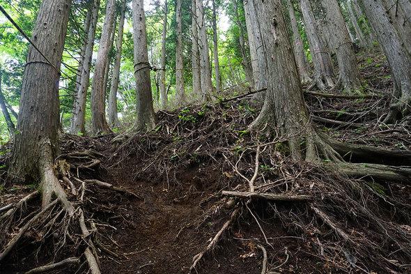 荒廃した山道